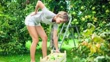 EU-OSHA avertizează asupra afecțiunilor musculo-scheletice în sectorul agricol
